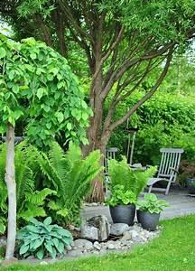Zimmerpflanzen Für Dunkle Ecken : sch ner mix aus schattenpflanzen wie farn und hostas f r ~ Michelbontemps.com Haus und Dekorationen