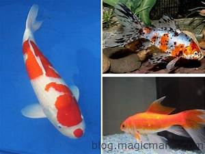 Bassin De Jardin Pour Poisson : bassin de jardin les premiers poissons ~ Premium-room.com Idées de Décoration