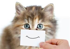 happy cat it s happy cat month arizona pet vet
