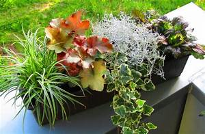 Balkonkästen Winterhart Bepflanzen : bepflanzter blumenkasten 60 cm wintergr n im ~ Lizthompson.info Haus und Dekorationen