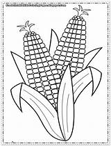 Corn Coloring Pages Printable Cob Sheets Colouring Sheet Indian Template Printables Autumn Preschool Ears Flower Popular Coloringhome sketch template