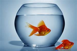 Welche Fische Passen Zusammen Aquarium : welche fische passen zusammen ein aquarium sinnvoll ~ Lizthompson.info Haus und Dekorationen