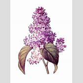 Floral Flower P...