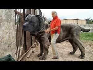 Sahibini En İyi Koruyan 10 Köpek Cinsi - YouTube