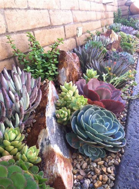 1000 ideas about succulent rock garden on