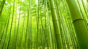 Bamboo Wallpapers | Best Wallpapers