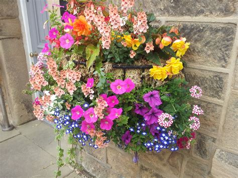 best summer flowers to plant best plants for hanging baskets ideas with images