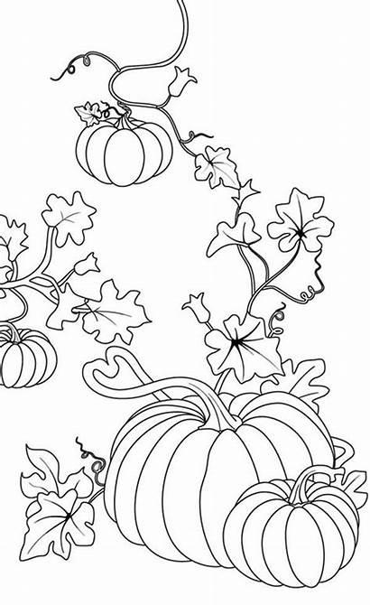 Coloring Pages Pumpkin Fall Pumpkins Halloween Diyhomer
