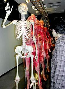 Mysteries Of The Human Body Subject Of Tokyo Exhibit