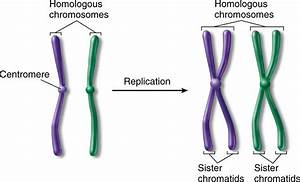 Chapter 4: Reproduction - StudyBlue