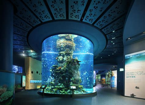 sea aquarium marine park sentosa singapore world for travel