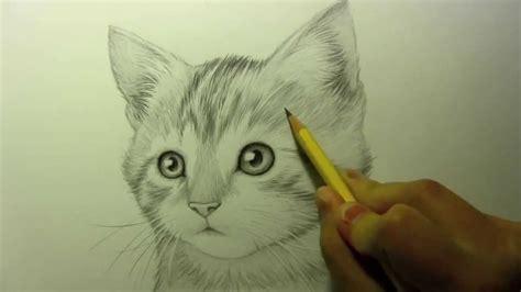 sketch  kitten youtube