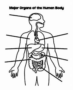 Human Body Side View Coloring Pages