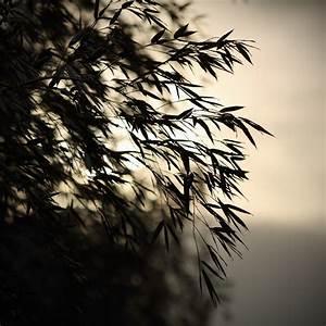 Bambus Zurückschneiden Frühjahr : bambus d ngen die perfekt d ngzeit die besten d nger ~ Whattoseeinmadrid.com Haus und Dekorationen