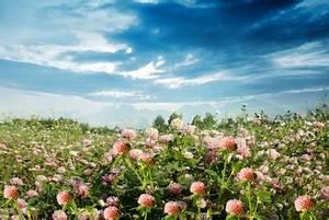 Roter Klee Im Rasen Was Tun : roter klee bek mpfung mit hausmitteln ~ Lizthompson.info Haus und Dekorationen