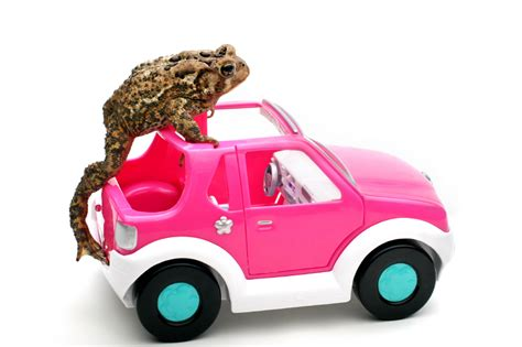 teslas elon musk  plug  hybrid cars  ummmm frogs