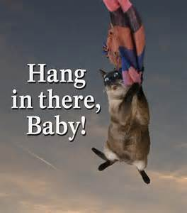 Hang in There Baby Cat