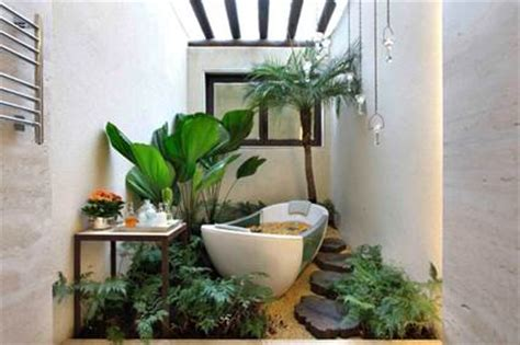pot plants for the bathroom plantas para decorar el ba 241 o decoraci 243 n de interiores y