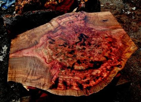 Was Kostet Holz by The Burl 7 Color Madrone Burl By