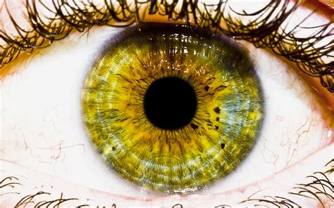 the eye wallpapers hd wallpapers id 513