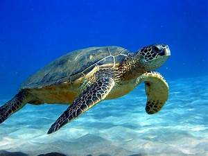 HABITAT - SPECTACULAR sea turtles