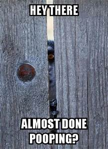 funny animal pictures of the day 26 pics With fear of public bathrooms phobia name