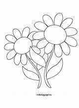 Daisies Flowers Coloring Template Coloringpage Eu sketch template
