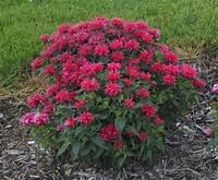 sun loving shrubs Scott's Top Ten Sun-Loving Plants for Spring 2015 - Dyck ...