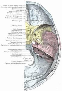Ethmoïdal : définition de ETHMOÏDAL, ALE, AUX , adj.,