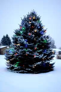 outdoor christmas tree with lights and snow picture free photograph photos public domain