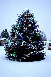 Outdoor Christmas Tree with Lights and Snow Picture | Free ...