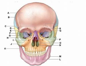 Exercise 11 - Axial Skeleton - Skull
