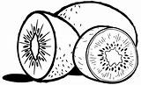 Kiwi Coloring Fruit Preschoolers sketch template