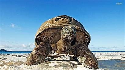 Turtle Beach Wallpapers Turtles Background Backgrounds Trying