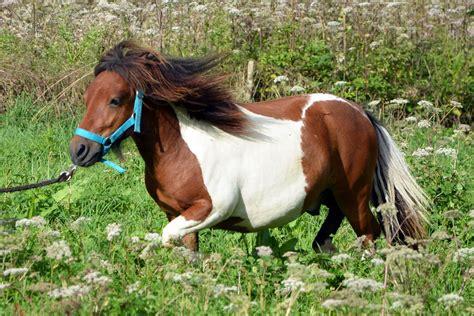 pet horse horses pets kind