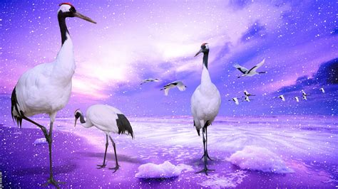red crowned cranes japan wallpapers hd wallpapers id