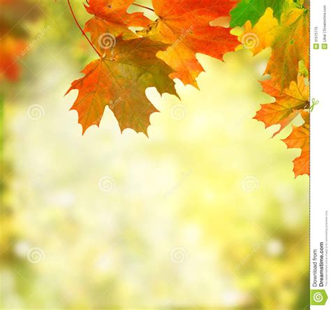 Falling Leaves Live Fall Backgrounds by Free Fall Background Pictures Http Www