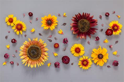 Fall Backgrounds Trendy by Digital Blooms September 2019 Free Desktop Wallpaper