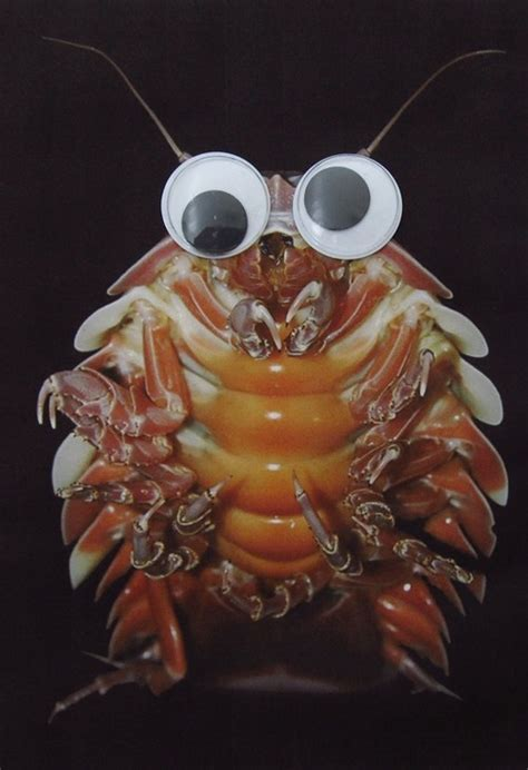 deep sea creatures improved   addition  googly