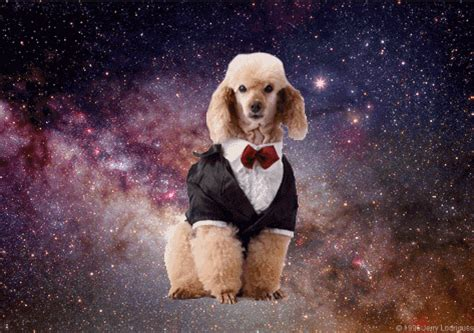 amazing gifs  dogs  space