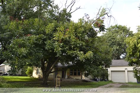 trees for the front yard the pecan tree is gone