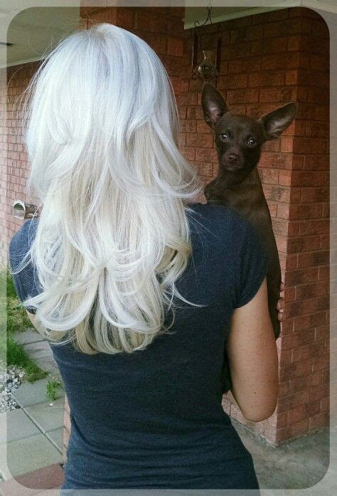 ice blonde layered hair cap highlight   wella  toner add chihuahua