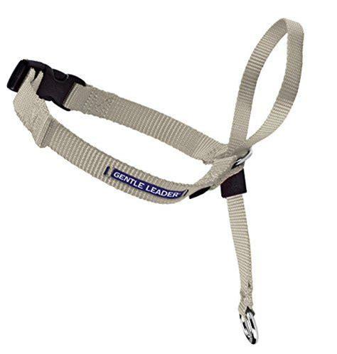 petsafe gentle leader head collar  training dvd medium