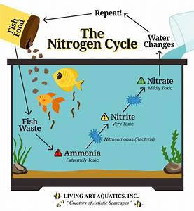 Why Is The Nitrogen Cycle Important For Your Aquarium