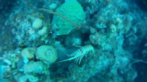 spearfishing grouper bahamas snapper lobster
