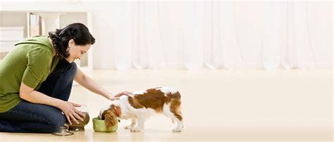 How To Feed Your Dog  Purina New Zealand  Purina