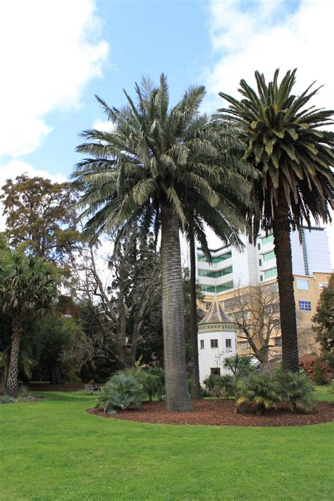total wine palm gardens threat to system garden at the of melbourne