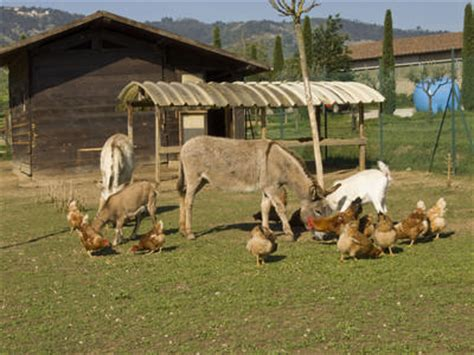 Quali Sono Gli Animali Da Cortile by Maneggio Gi 210 Ranch Di Pistoia Ti Aspettiamo Tra Cavalli
