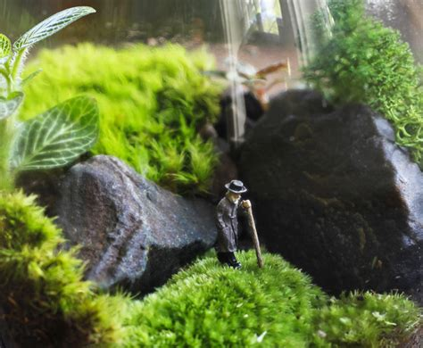 make your own moss terrarium diy how to make your own green terrarium to keep or give away for the holidays inhabitat