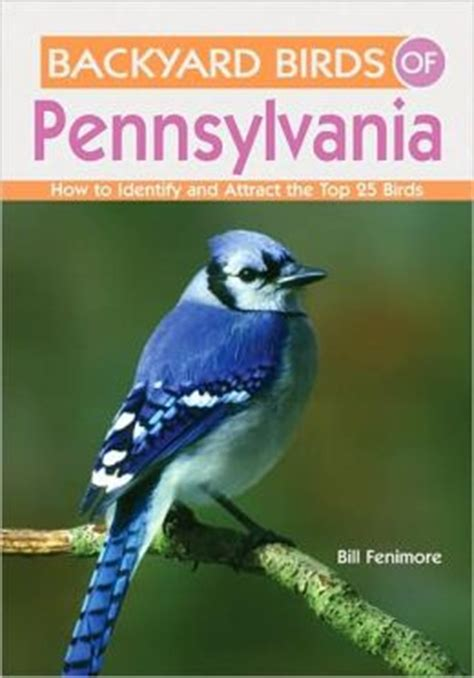 best 28 birds of pennsylvania identification common